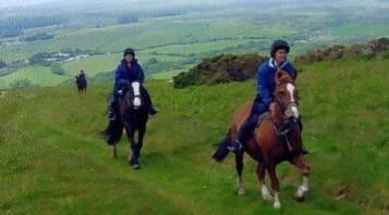 Crosswell Horse Agency – Velindre